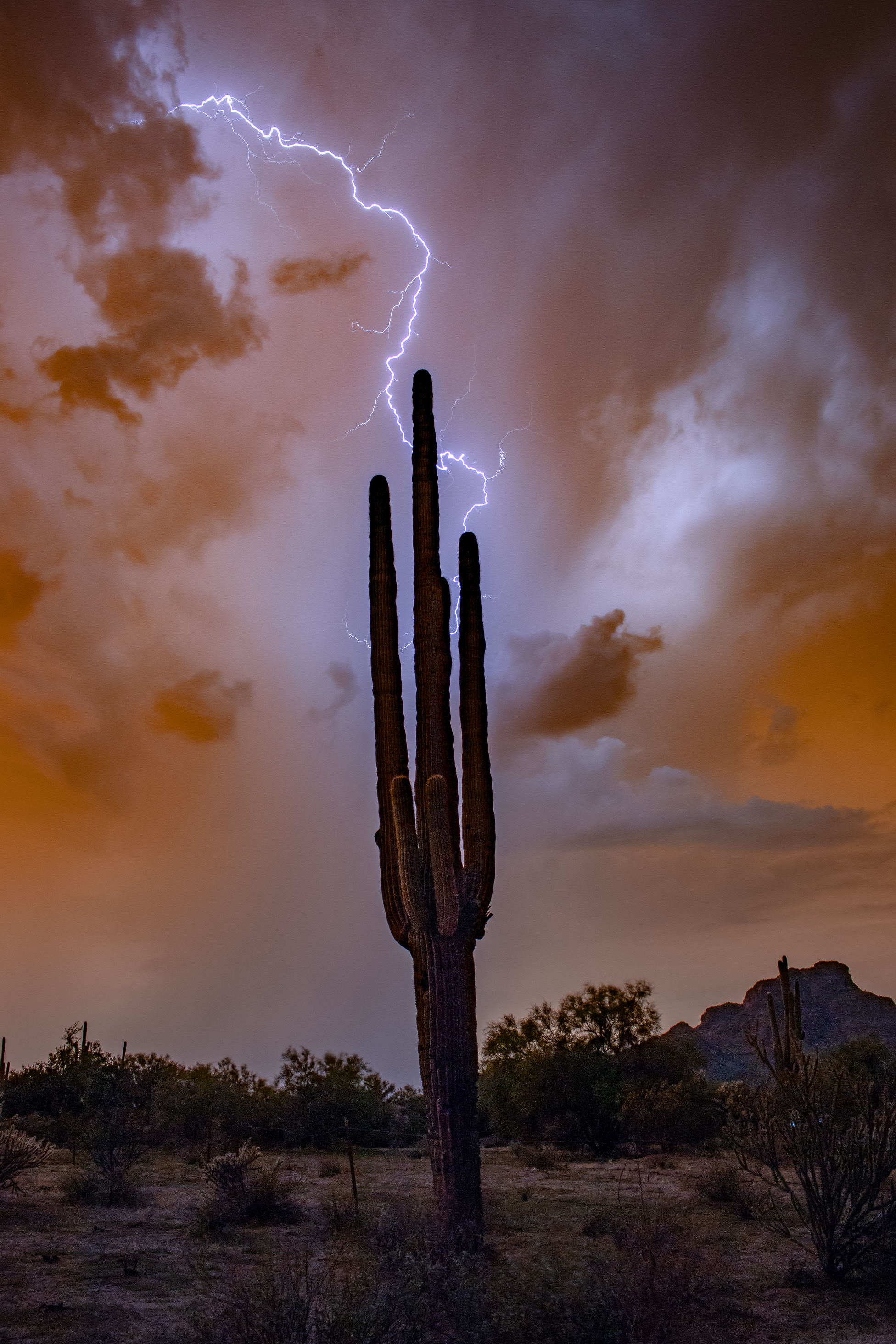 Scenic Arizona Photography from Joan Wood – January 12th