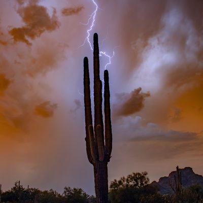 Scenic Arizona Photography from Joan Wood – January 12th